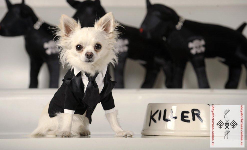 Пошив одежды для собак как бизнес