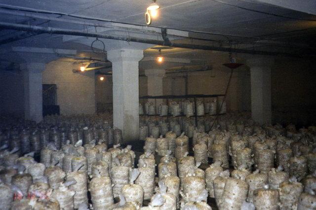 Пример грибной фермы