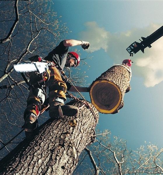 Спиливание деревьев как бизнес
